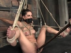 Bobbie Starr, tied up, ass fucked, forced to cum, and dominatated